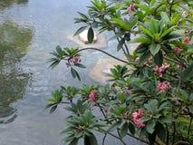 池塘和自然在拱廊 库存图片