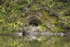池塘和蕨在绿色雨林在新西兰 库存图片