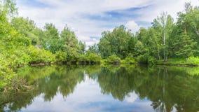 池塘在云彩下的夏天森林里 股票录像
