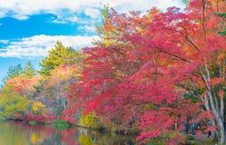 池塘在令人愉快的秋天 免版税库存图片