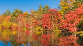 池塘在令人愉快的秋天 库存图片