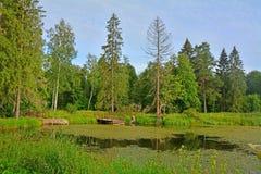 池塘在农庄公园Znamenskoye-Rayok庄园(18世纪)在Torzhok区 免版税库存照片