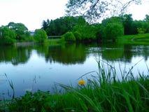 池塘在夏天 免版税库存照片