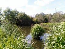 池塘在夏天 库存图片
