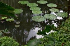池塘在庭院里 库存图片