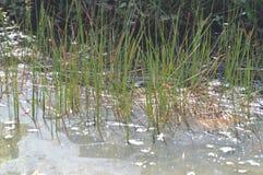 池塘在强湿地 库存照片