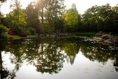 池塘在日本庭院里在弗罗茨瓦夫 库存照片