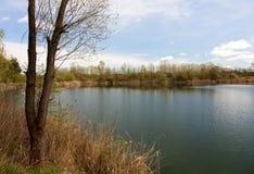 池塘在早期的春天 免版税库存图片