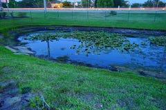 池塘在晚上 图库摄影