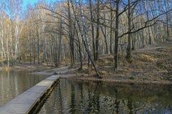 池塘在森林公园在10月下旬 免版税库存图片