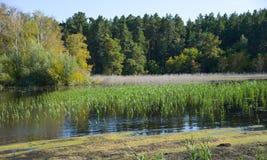 池塘在森林里晚夏 库存照片