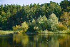 池塘在森林里晚夏 免版税库存图片