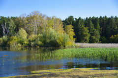池塘在森林里晚夏 库存图片