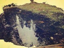 池塘在森林里,冬天 免版税库存图片
