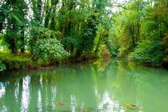 池塘在森林里 免版税图库摄影