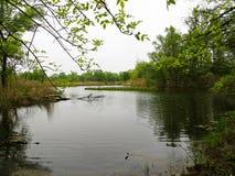 池塘在森林里 库存图片