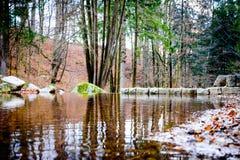 池塘在森林里 库存照片