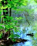 池塘在森林 库存照片