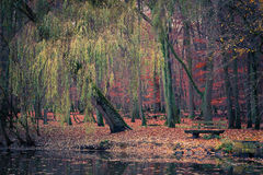 池塘在秋天公园 免版税图库摄影