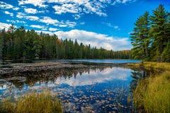 池塘在秋天森林里 免版税库存图片