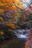 池塘在秋天森林里 库存照片