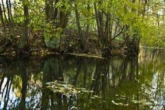 池塘在秋天 库存照片