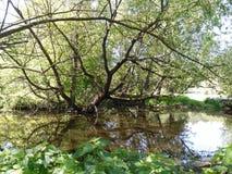 池塘在郊区 库存照片