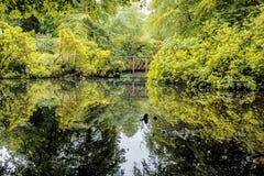 池塘在野兔小山庭院里 免版税库存图片