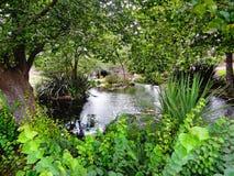 池塘在金门公园 免版税图库摄影