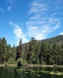 池塘在晴朗的森林里 库存照片