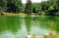 池塘在Horsovsky Tyn,捷克 库存图片