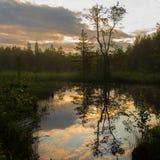 池塘在Värmland瑞典 库存图片