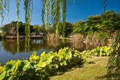 池塘平静热带 免版税库存图片