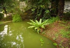 池塘庭院 库存图片