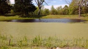 池塘我的家外 免版税库存照片