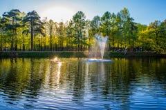 池塘春天森林 库存照片