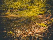 池塘是在五颜六色的叶子沐浴的秋天 免版税库存图片