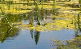 池塘机器寿命 免版税图库摄影