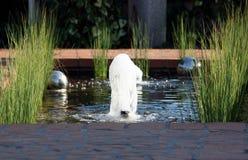 池塘水 免版税库存照片