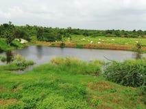 池塘水 免版税库存图片