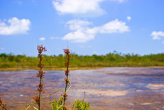 池塘沼泽地 免版税库存照片
