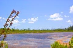 池塘沼泽地 库存图片