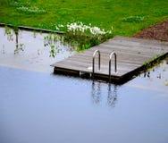 池塘游泳 免版税库存图片
