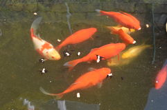 池塘狂放的生活 免版税库存图片