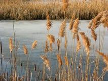 池塘用茅草盖冬天 免版税库存图片