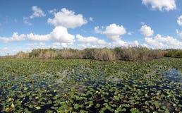 池塘的一个风景看法 库存照片