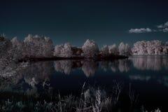 池塘的古典Infraredred图片 免版税图库摄影