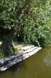 池塘的岸 图库摄影