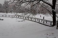 池塘的溜冰者 免版税库存照片