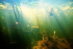 池塘的美好的水下的视图 库存照片